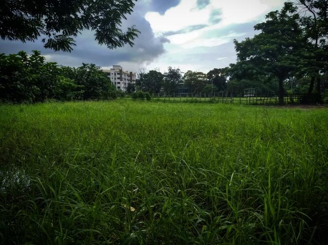 Green Fields of Summer